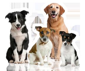 International Canine Association, Inc